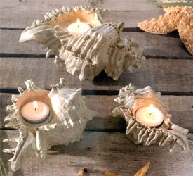 sea shell candle colders