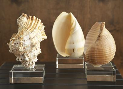 sea shell art on plexi glass statue decor
