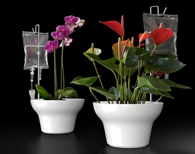 emergency watering for your plants